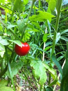 red-tomato